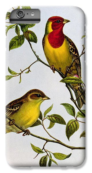 Red Headed Bunting IPhone 6 Plus Case by John Gould