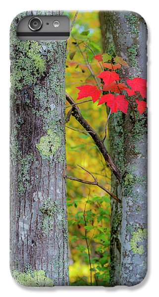 Red Leaves IPhone 6 Plus Case