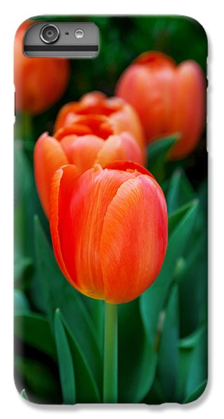 Tulip iPhone 6 Plus Case - Red Tulips by Az Jackson