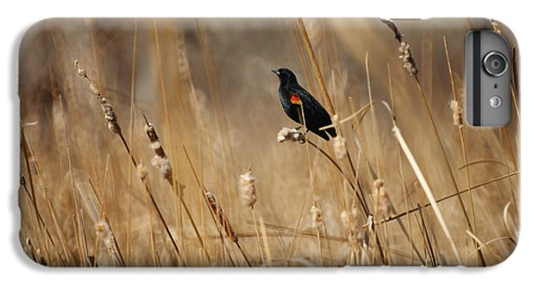 Red Winged Blackbird IPhone 6 Plus Case by Ernie Echols