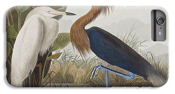 Reddish Egret IPhone 6 Plus Case