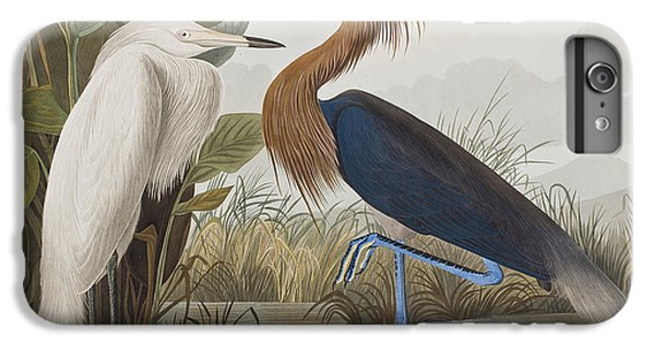 Reddish Egret IPhone 6 Plus Case by John James Audubon