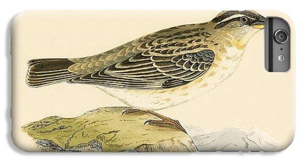 Rock Sparrow IPhone 6 Plus Case