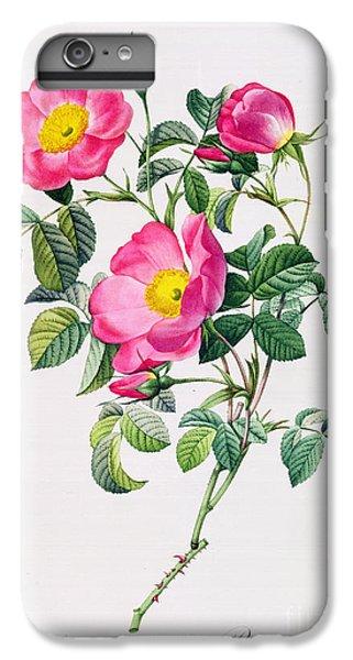 Rose iPhone 6 Plus Case - Rosa Lumila by Pierre Joseph Redoute