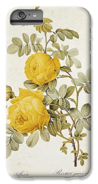Garden Snake iPhone 6 Plus Case - Rosa Sulfurea by Pierre Redoute