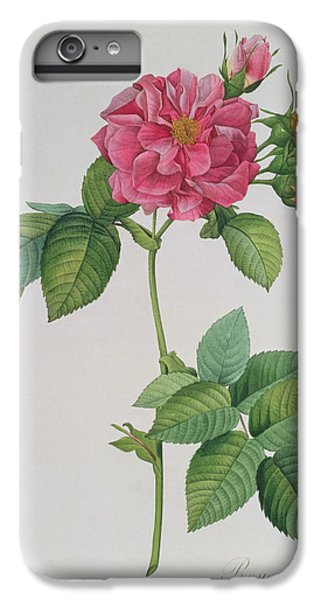 Rose iPhone 6 Plus Case - Rosa Turbinata by Pierre Joseph Redoute