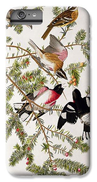 Rose Breasted Grosbeak IPhone 6 Plus Case