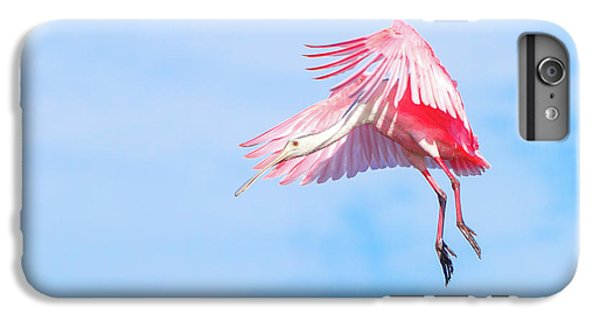 Roseate Spoonbill Final Approach IPhone 6 Plus Case