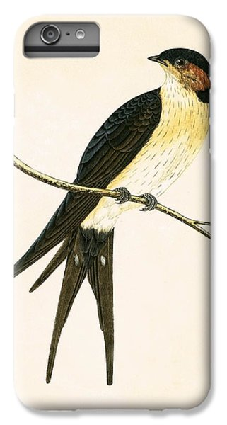 Rufous Swallow IPhone 6 Plus Case by English School