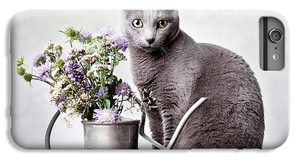 Cats iPhone 6 Plus Case - Russian Blue 02 by Nailia Schwarz