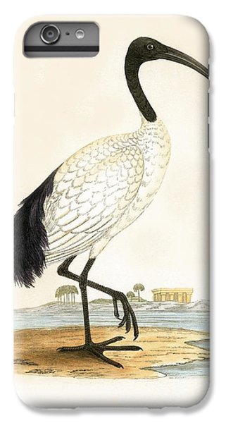 Ibis iPhone 6 Plus Case - Sacred Ibis by English School