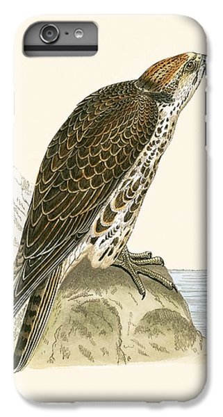 Saker Falcon IPhone 6 Plus Case by English School