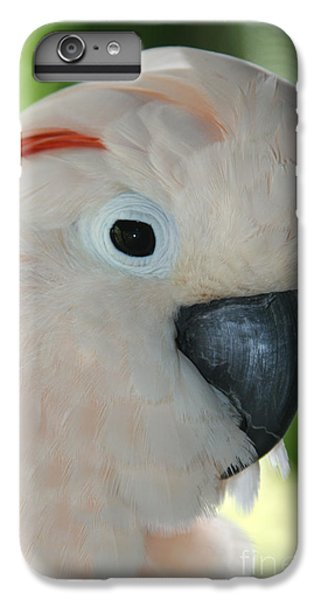 Salmon Crested Moluccan Cockatoo IPhone 6 Plus Case by Sharon Mau