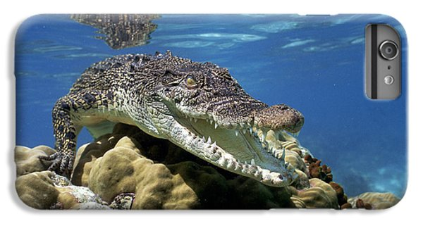 Saltwater Crocodile Smile IPhone 6 Plus Case by Mike Parry