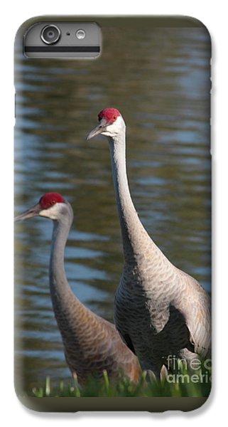 Sandhill Crane Couple By The Pond IPhone 6 Plus Case