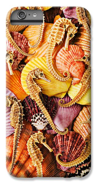 Sea Horses And Sea Shells IPhone 6 Plus Case