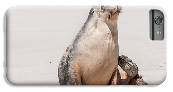 Sea Lion 1 IPhone 6 Plus Case by Werner Padarin