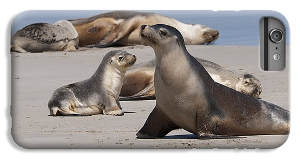 IPhone 6 Plus Case featuring the photograph Sea Lions by Werner Padarin