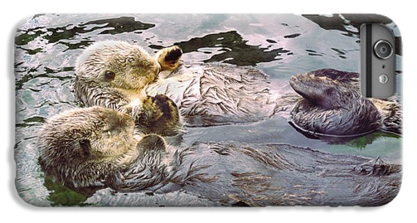 Sea Otters Holding Hands IPhone 6 Plus Case by BuffaloWorks Photography