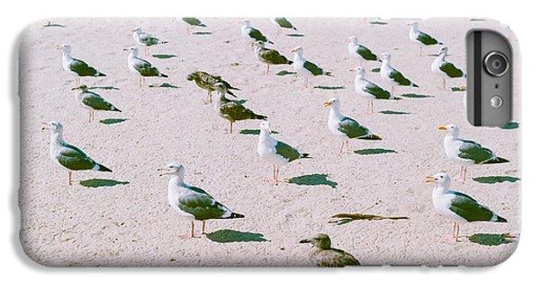 Seagulls  IPhone 6 Plus Case