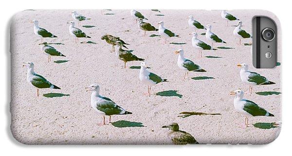 Seagulls  IPhone 6 Plus Case by Ariane Moshayedi