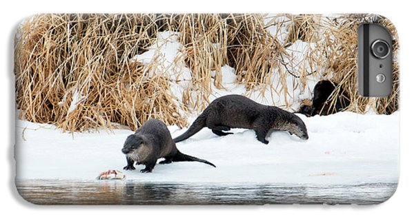 Sharing A Meal IPhone 6 Plus Case by Mike Dawson