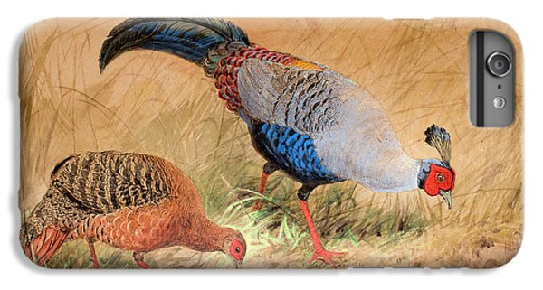Siamese Pheasant  IPhone 6 Plus Case by Joseph Wolf