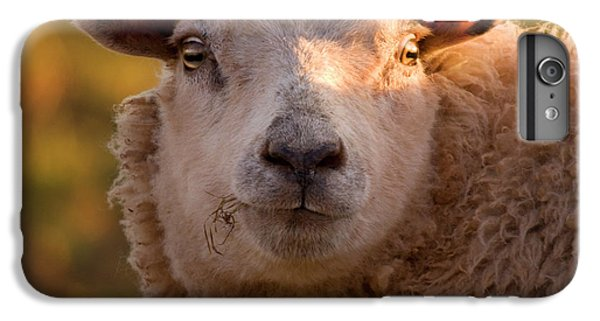 Sheep iPhone 6 Plus Case - Silly Face by Angel Ciesniarska