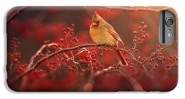 Cardinal iPhone 6 Plus Case - Simple Beauty by Rob Blair
