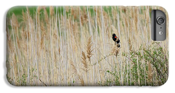 IPhone 6 Plus Case featuring the photograph Sing For Spring by Bill Wakeley
