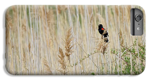 IPhone 6 Plus Case featuring the photograph Sing For Spring Square by Bill Wakeley