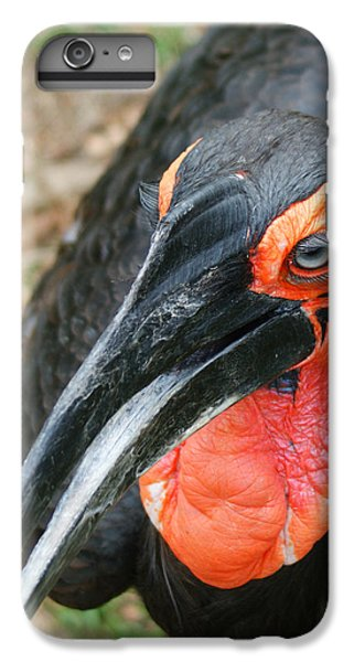 Southern Ground Hornbill IPhone 6 Plus Case by Ernie Echols