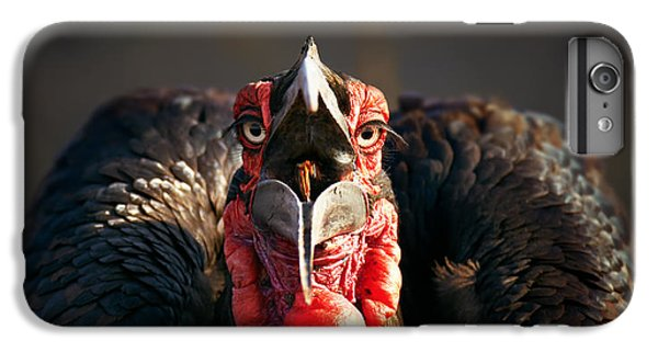 Southern Ground Hornbill Swallowing A Seed IPhone 6 Plus Case by Johan Swanepoel
