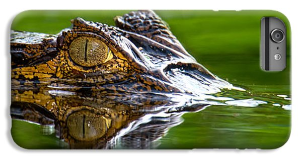 Crocodile iPhone 6 Plus Case - Spectacled Caiman Caiman Crocodilus by Panoramic Images