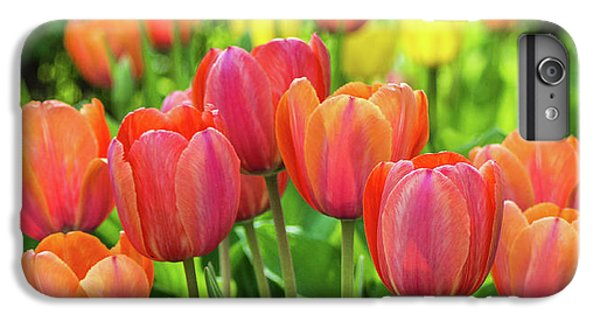 IPhone 6 Plus Case featuring the photograph Splash Of April Color by Bill Pevlor