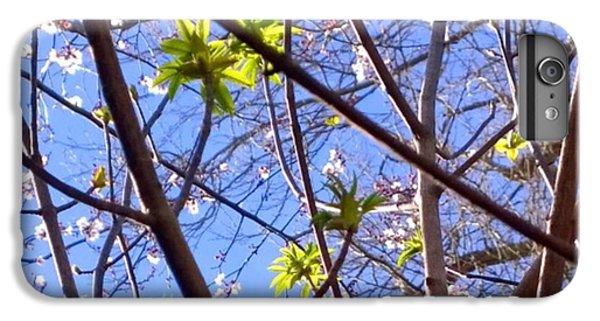 Sky iPhone 6 Plus Case - Spring Leaves #seasons #trees by Shari Warren