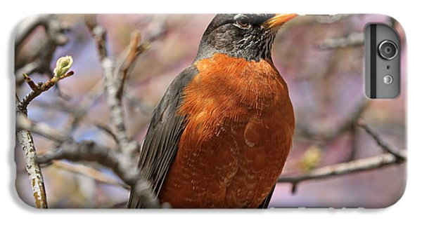 Spring Robin IPhone 6 Plus Case by Donna Kennedy