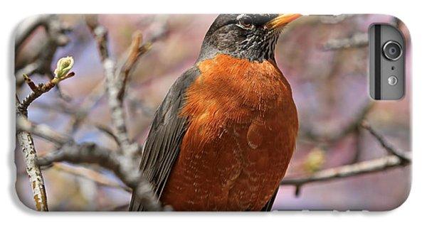 Spring Robin IPhone 6 Plus Case