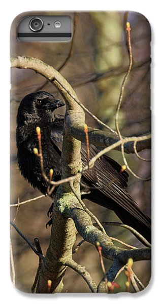 IPhone 6 Plus Case featuring the photograph Springtime Crow by Bill Wakeley