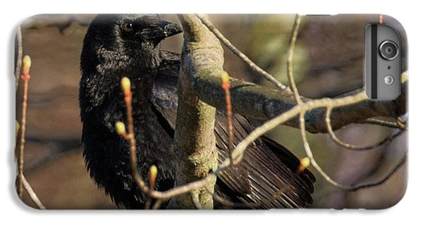 IPhone 6 Plus Case featuring the photograph Springtime Crow Square by Bill Wakeley