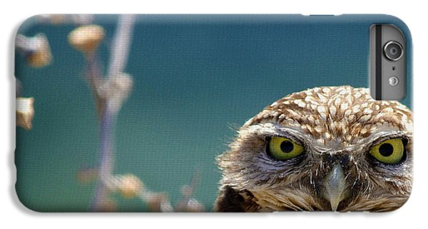 Owl iPhone 6 Plus Case - Standing My Ground Deux by Fraida Gutovich