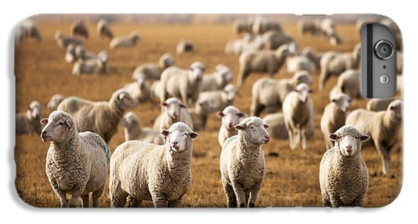 Sheep iPhone 6 Plus Case - Standing Out In The Herd by Todd Klassy