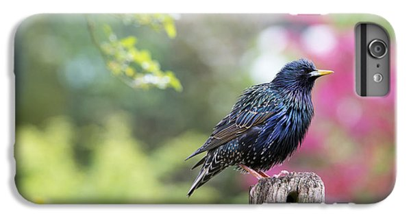Starling  IPhone 6 Plus Case by Tim Gainey