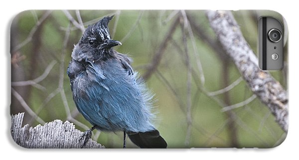 IPhone 6 Plus Case featuring the photograph Stellar's Jay by Gary Lengyel