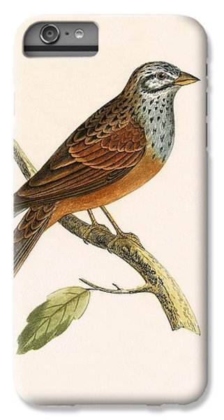 Striolated Bunting IPhone 6 Plus Case