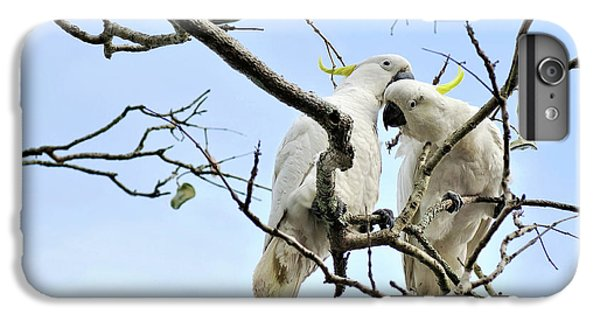 Sulphur Crested Cockatoos IPhone 6 Plus Case by Kaye Menner