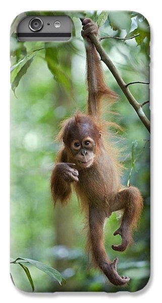 Sumatran Orangutan Pongo Abelii One IPhone 6 Plus Case by Suzi Eszterhas