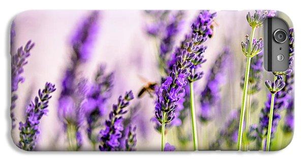Honeybee iPhone 6 Plus Case - Summer Lavender  by Nailia Schwarz