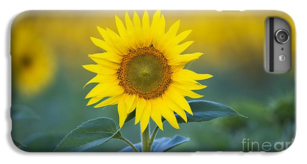 Sunflower iPhone 6 Plus Case - Sunflower by Tim Gainey