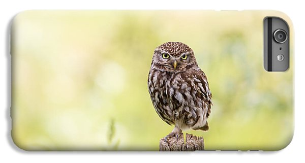 Sunken In Thoughts - Staring Little Owl IPhone 6 Plus Case by Roeselien Raimond
